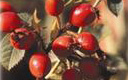 Rose Hip Oil